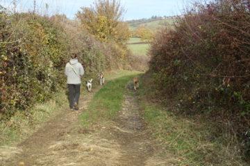 Plaatje: Met de hond naar de Morvan - Reizen met je hond