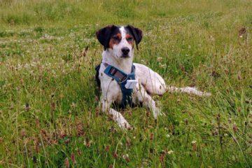 Tinus met GPS-tracker Blog Reizen met je hond