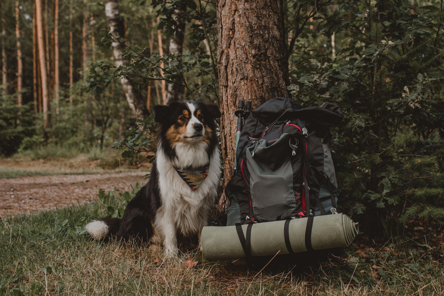 20190804_Reizen met je hond_Nova_klein