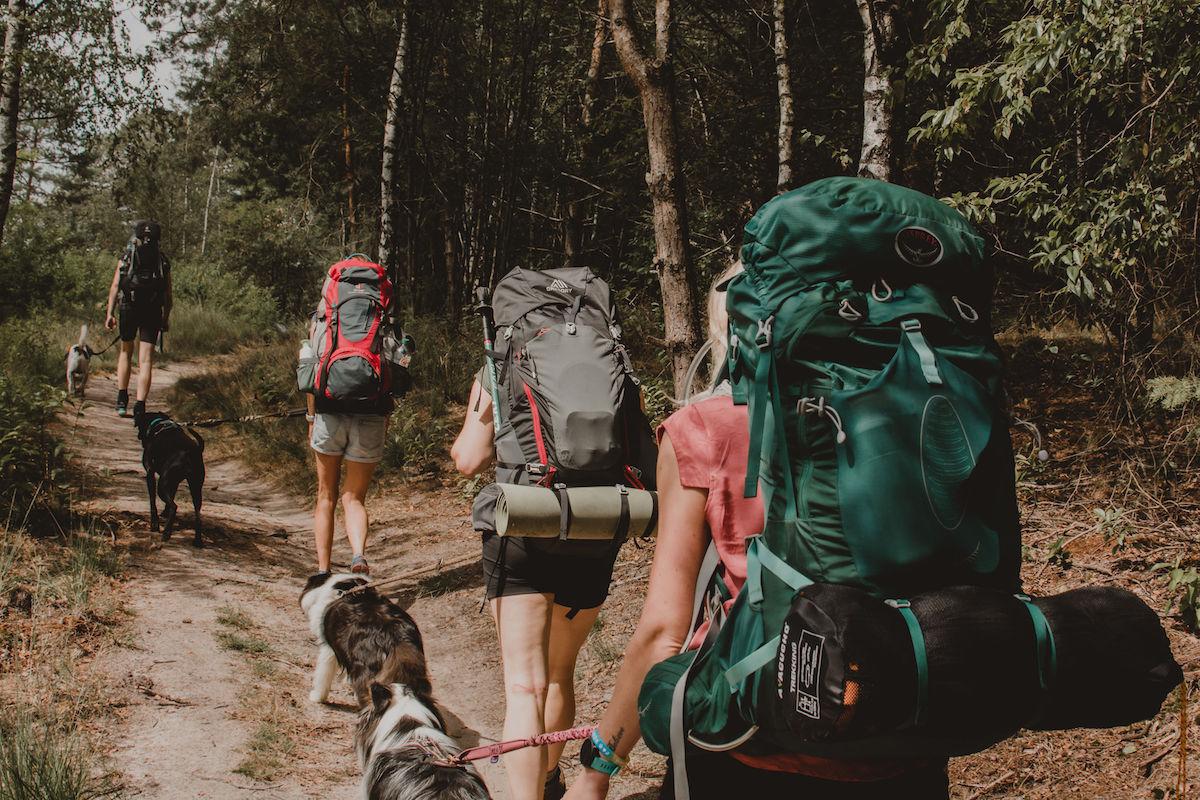 20190804_Reizen met je hond_groep_3_klein
