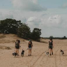 Backpacken met je hond op de Veluwe