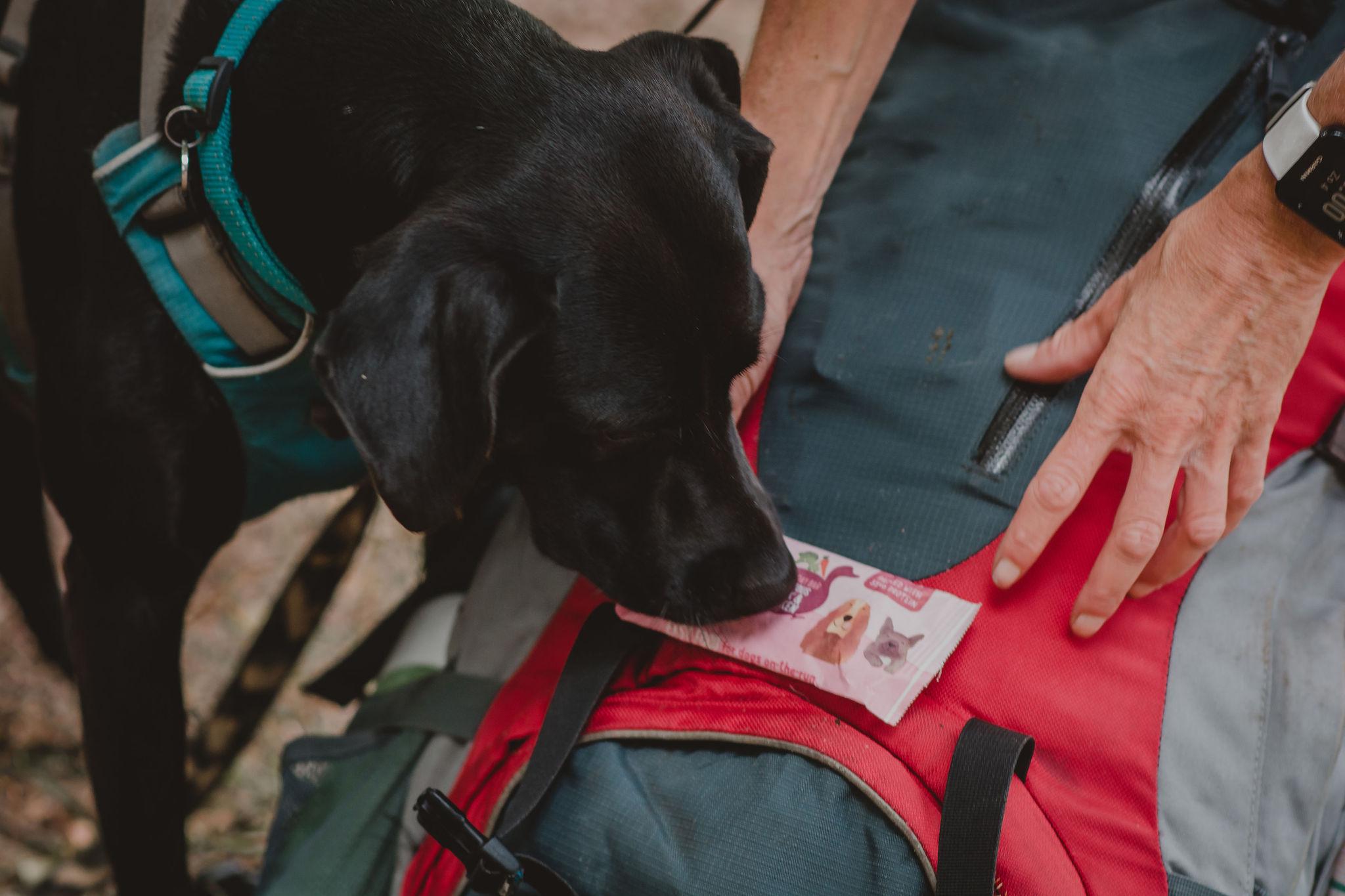 Keesje snacks_Reizen met je hond