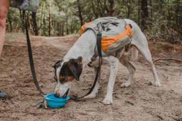 Welk voer neem je mee op een trektocht met je hond?