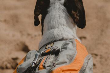 Is jouw hond geschikt voor een backpacktocht?