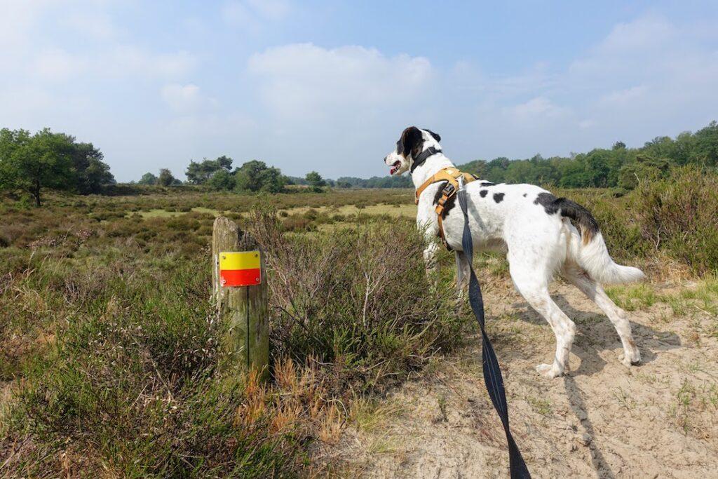 Tinus Drenthepad_Reizen met je hond
