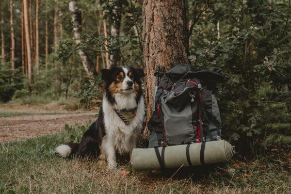Paklijst voor je hond_Reizen met je hond