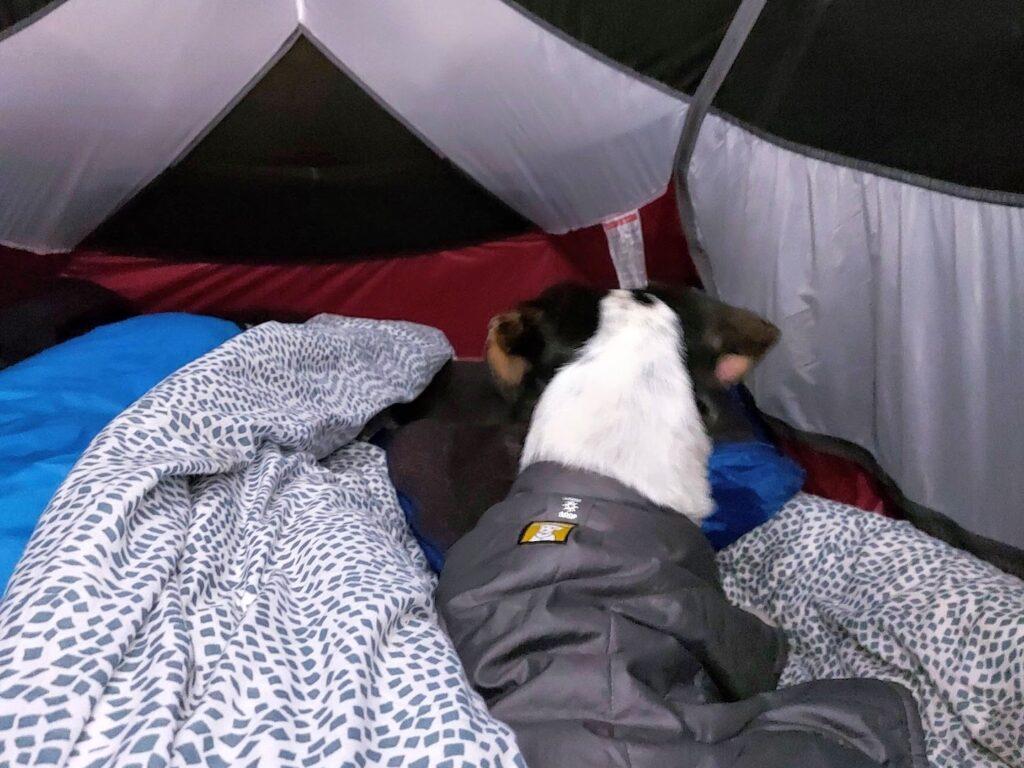 Tinus in de tent in de winter