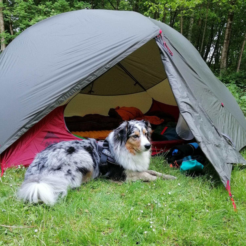 Hond Kenay voor de tent