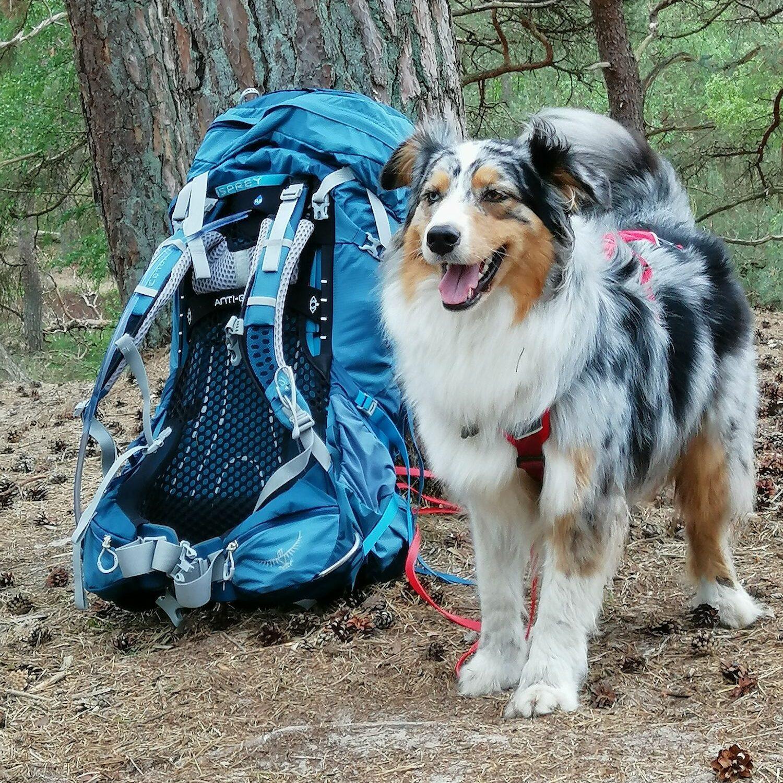 Hond Kenay bij de backpack