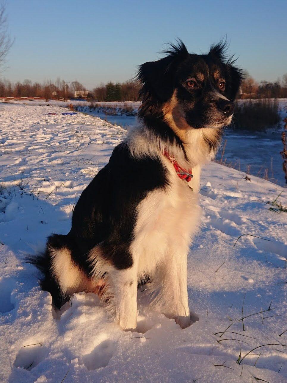 Voorbereiding voor bergtocht met hond_2