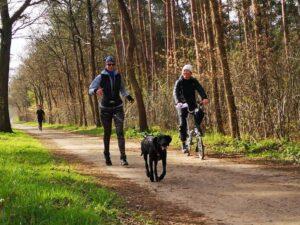 Praktijkexamen Run Dog Trainer Canicross