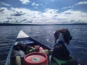 Kanovaren met je hond in Zweden