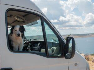 Hond Joep in camperbus