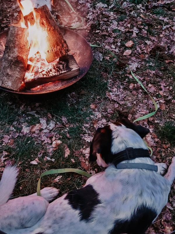 Buitenweekend met je hond_kampvuur